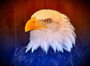 #CrazyCamera eagle