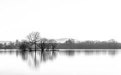 Divide (rgcxyz35) Tags: trees lochs bw water reflections sky lochlomond hills blackandwhite scotland milarrochybay