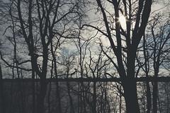 Albert Lea Lake - Myre-Big Island State Park, Minnesota (Tony Webster) Tags: albertlealake april minnesota myrebigisland myrebigislandstatepark forest hike hiking hikingtrail spring statepark sun trail trees albertlea unitedstates us wmc1830