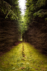 harvest (phlickrron) Tags: wandern hiking outdoors nature forest tree path harvest bavaria