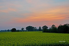 Tenue crepuscolo (stefano.chiarato) Tags: campagna campi giallo colza crepuscolo lombardia italy