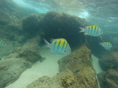 snorkel water mexico reef sand fish octopus coral