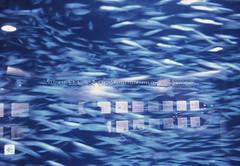 finding nemo (nant159159) Tags: nemo findingnemo coex coexaquarium seoul korea fish meditation rest inspiration motivation blue filmphoto film kodakfilm slidefilm underwater water sardine swim 정어리 수영 수족관 아쿠아리움 코엑스 서울 한국 휴식 명상 영감 필름사진 슬라이드필름 코닥필름 파란 니모 물속 물