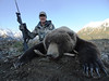 Alaska Dall Sheep Hunt & Moose Hunt 19