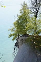DSC09156 (Olaf Biedron) Tags: rügen buchen steilküste buchenwald baum tree steepcoast
