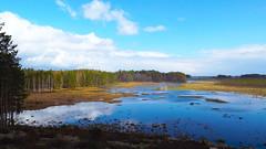 Čepkeliai-Raised Bog (04) (rimasjank) Tags: bog swamp spring nature water cepkeliai ngc