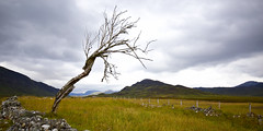 Lonely tree (heiko.harders) Tags: scotland easthighlandway tree lonely nature outdoor glen clouds mountains landscape