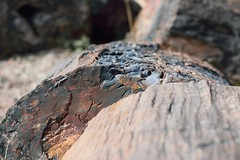DSC_0245_1373 (thokaty) Tags: petrifiedforest nationalpark arizona holbrook roadtrip petrifiedwood route66