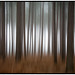 Pine abstract (Missy2004) Tags: newforest nikkorafs18105mm3556ged 117picturesin2017 74117 intentionalcameramovement icm misty abstract explored