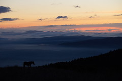 Horse (Massimo_Discepoli) Tags: horse dusk mountains fog mist sky clouds sunset silhouette