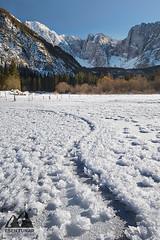 Ice Flowers (etunar) Tags: slovenia winter ice snow landscape landscapephotography mountains lake iceflakes italy triglavnationalpark mountainridge snappguides