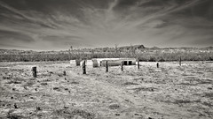 What remains (magnetic_red) Tags: desert dirt dry blackandwhite sky clouds dramatic abandoned decay desolate posts wood fence cracks weeds nevada blm stthomas ghosttowns