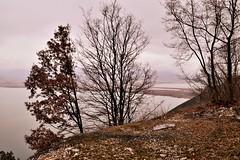 Lake View CSC_2743 (joanna papanikolaou) Tags: travel trees lakes lake prespes greece view landscape land scape scene scenery scenic lakescape lakescenery lakeshore exploration
