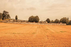 _Q9A5483 (gaujourfrancoise) Tags: france southwest sudouest charente fields champs été summer ocher ocre