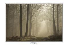 IMGP0067-2 (Francinen89) Tags: forêt forest matin morning nature arbres trees brume brouillard fog