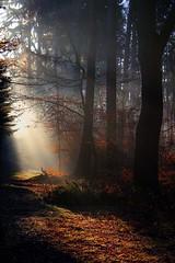 Morninglight (Waldmädchen16) Tags: forest germany light trees path landscape morning wald morgen licht