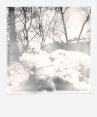 002(5)1 (rubeninstant) Tags: polaroid land camera slr680 slr 680 polaroid680 impossible impossibleproject impossiblebarcelona filmisnotdead instantfilm istillshootfilm snow snowed wooden trees forest freeze frame blackandwhite bw blackwhite byn