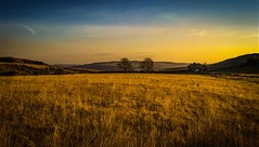 symmetry at sunset (Rae de Galles) Tags: nationalpark swanseavalley farmhouse haze symmetry blueskies mountains hills nature cymru wales southwales valley trees twotrees evening goldenhour sunset gold field breconbeacons beacons brecon