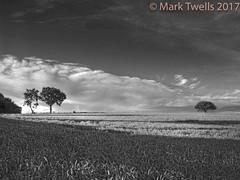 That Tree (Mark Twells) Tags: thattree bw summer annscroft england unitedkingdom gb