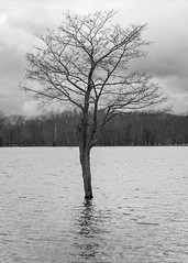 Lonesome Tree (Bill McBride) Tags: newengland spring flood landscape easthampton river nature water connecticutriver outdoors massachusetts pioneervalley oxbow