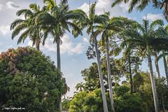 Palms (Juanpagraphics) Tags: nature palms palmas colombia landscape