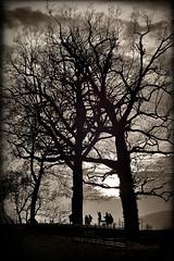 Mid-November Sunset (Jens Flachmann) Tags: trees sunset blackandwhite germany bielefeld autumn tree dark sky clouds silhouette