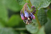 bee (dr.larsbergmann) Tags: insect insects insekten flowers flora languageofflowers flower flickr photography photo ef100400mmf4556lisiiusm