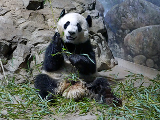 Bei Bei (Hey! How d'ya like my panda'd camera smile?) 2017-03-09 at 12.58 PM
