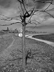 Symbol (ancientlives) Tags: chicago illinois usa lakefronttrail walking streetphotography bluesky clouds tuesday april 2017 spring warm lakemichigan lake symbol blackandwhite bw mono monochrome burnhamcorridor nature