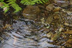 IMGP0337 (gibbyli) Tags: pentax ks2 18135mmwr 南澳 宜蘭 金洋村 神祕湖 呂氏攀蜥 南澳闊葉樹林自然保留區 泰雅 鬼湖 南澳濕地 japalura luei