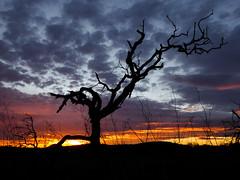 Ultimas luces (carmenvillar100) Tags: puestadesol sunset ocaso santa ines ibiza eivissa