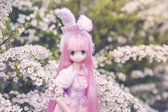 (Jane Kolyadintseva) Tags: azone doll pureneemo pink collor flower kawaii cute riley