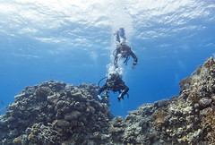 1204 18a (KnyazevDA) Tags: disabled diver disability diving owd underwater undersea padi redsea buddy handicapped paraplegia paraplegic