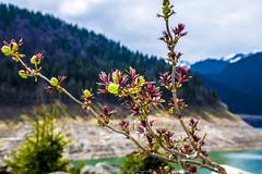 Nice !?!:) (Don Costello) Tags: lake dam forest mountains nature beauty landscape retezat nikon d3300 floral closeup