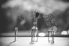 mini vases (auntneecey) Tags: monochrome mono macro flowers vases backlight bokeh tabletop 365the2017edition 3652017 day119365 29apr17