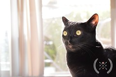 Hi Guyzz (MrsJust) Tags: kitty black cat witchycat witch pets animals lovers purrfect