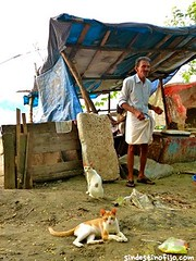 "gatos pescadores • <a style=""font-size:0.8em;"" href=""http://www.flickr.com/photos/92957341@N07/8750562120/"" target=""_blank"">View on Flickr</a>"