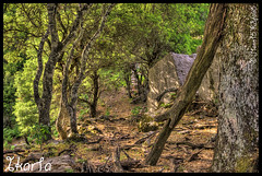 Ikaria 305 (anefantis) Tags: forrest hiking path ikaria hdr