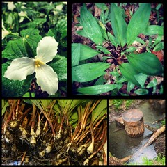 "Day 11. Hidden Treasures on a Morning Walk (aka. ""SCORE""!) (Just Jillian) Tags: diptic dipticapp"