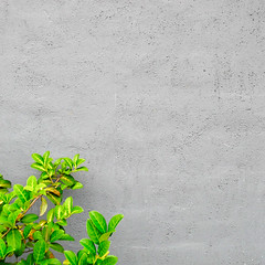 121 of 365 (Wicked Sushi) Tags: plant green texture nature leaves wall square concrete grey outdoor gray shrub minimalism juxtaposition minimalist 500x500 365project hz30w