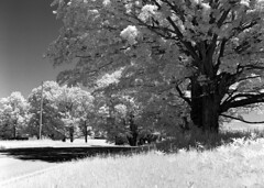 Conrad Road on Rollei Infrared film (Bronica John) Tags: road b blackandwhite bw white black film rollei self mediumformat amber michigan w filter bronica 400 infrared epson medium format developed ilford township ludington selfdeveloped cokin 89b bronicaetrsi id11 etrsi v500 mediumformatfilm ilfordid11 ludingtonmichigan rolleiinfrared contrad ambertownship rollei400 film:iso=400 cokin89b epsonv500 cokin89bfilter developer:brand=ilford film:brand=rollei developer:name=ilfordid11 rolleiinfraredir film:name=rolleiinfraredir400 conradroad filmdev:recipe=8739
