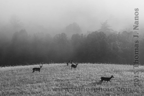 "Deer in the Mist • <a style=""font-size:0.8em;"" href=""http://www.flickr.com/photos/20365595@N04/9316024662/"" target=""_blank"">View on Flickr</a>"