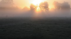 Morgennebel in Bergenhusen; Stapelholm (9) (Chironius) Tags: morning fog sunrise germany deutschland dawn nebel alba amanecer alemania dmmerung sonnenaufgang allemagne morgen niebla brouillard germania ochtend schleswigholstein matin gegenlicht  morgens zonsopgang mattina aube ogie pomie morgendmmerung morgengrauen niemcy dageraad  bergenhusen   stapelholm  pomienie szlezwigholsztyn