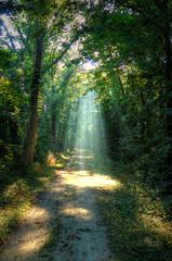 Beam me up (kendoman26) Tags: trees light sun rays sunbeam towpath sunray imcanal sonyalpha iandmcanal imcanaliandmcanal sigma1850f2845 blinkagain bestofblinkwinners sonya57 sonyslta57
