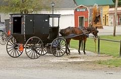 "Mesopotamia Township Ohio - ""Impatience"" (Jack W. Pearce) Tags: amish mesopotamia mespo trumbullcounty mahoningvalley amishhorseandbuggy mesopotamiatownship"