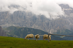 Brave ragazze ( steppe) Tags: italy italia steppe valgardena stefanoperoni