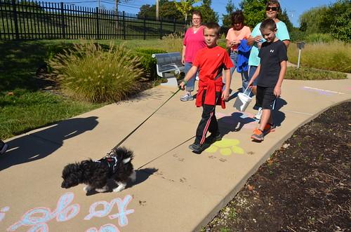Kids Dog Walk 2013