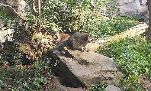 ゲルゼンキルヒェンの動物園 ー ZOOM Erlebniswelt by Ik T