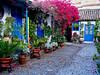El patio (Jesus_l) Tags: españa europa córdoba patiocordobés jesusl