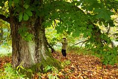 horse chestnut (polaris37) Tags: scotland aberdeenshire horsechestnut polaris37